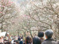 世界一美しい半島・伊豆に春が来る