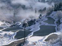 松之山温泉の棚田