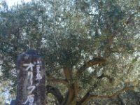 香川小豆島絵になる風景が輝く