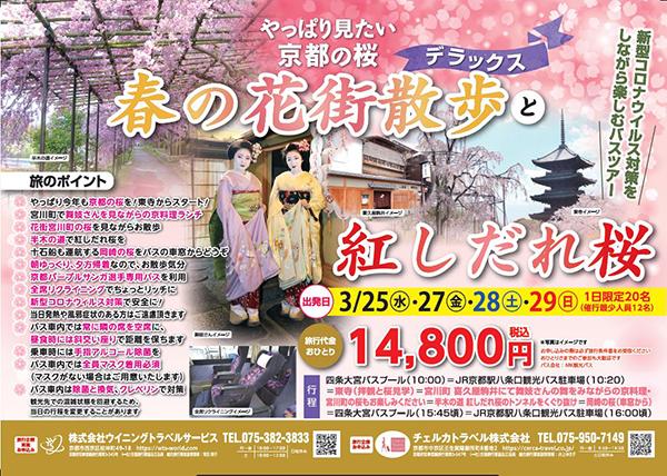 やっぱり見たい京都の桜