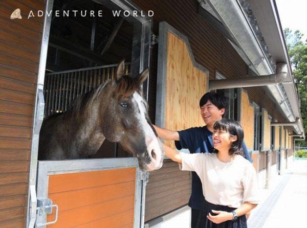 アドベンチャーワールド、厩舎で馬と触れ合う施設「THE STABLE」開業 ...